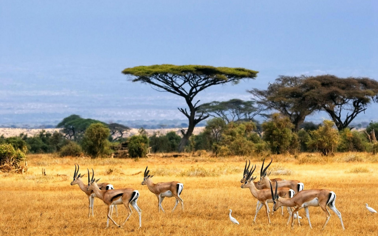Heart of Africa Safari Tours